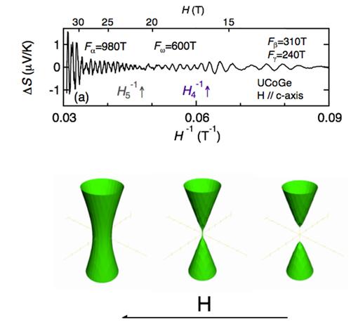 強磁性超伝導体UCoGeの熱電能の量子振動