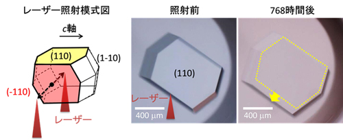 レーザーによるタンパク質(ニワトリ卵白リゾチーム)の結晶成長の促進