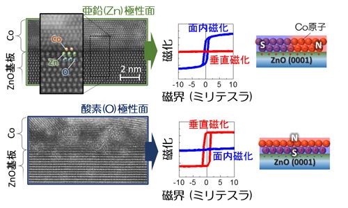 亜鉛及び酸素極性面上に製膜したコバルト薄膜の透過型電子顕微鏡像